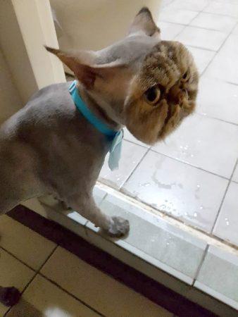 Кот-тарелка