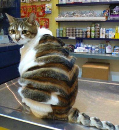 Кот-булочка