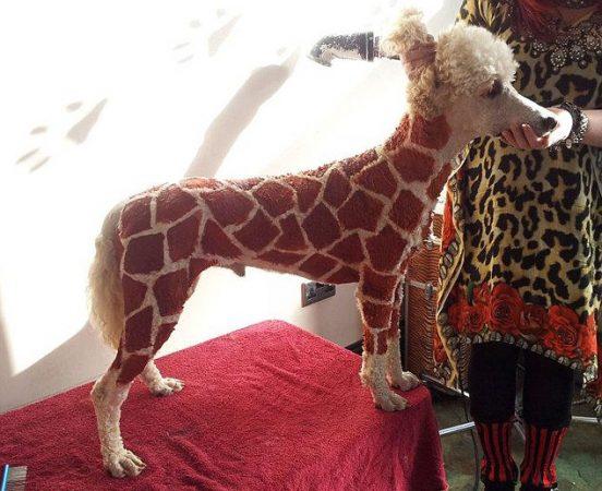 Пёс-жираф