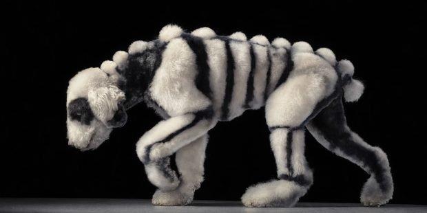 Пёс-скелет