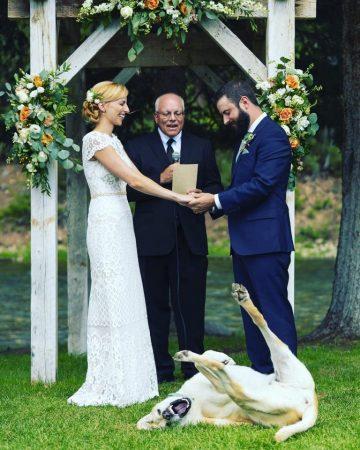 Невоспитанный пёс на свадьбе