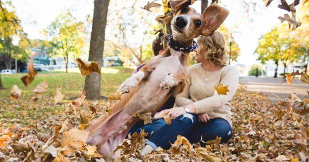 Собака-непоседа на фотосессии
