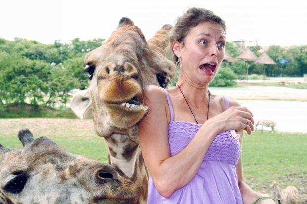Любвеобильный жираф
