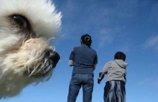 Подозрительна собака