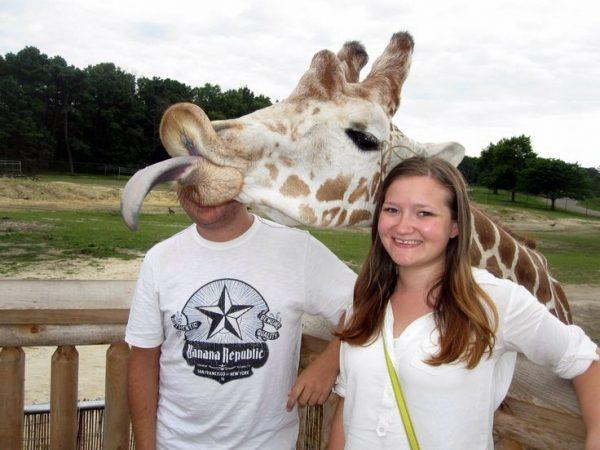 Некультурный жираф