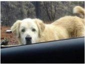 пес ждет хозяев