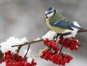 15 видов зимующих птиц — фото и описание