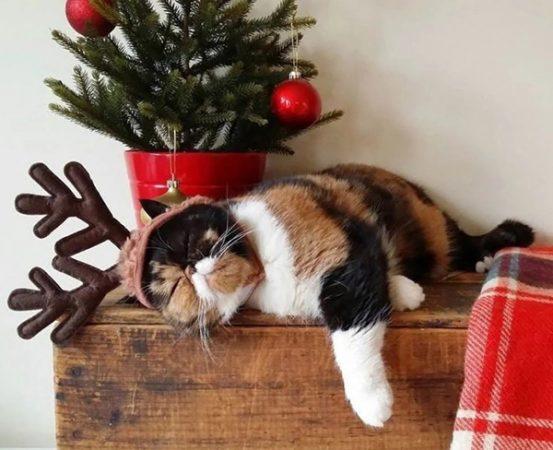 Кот под елкой