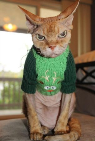 Котик в свитере с оленем