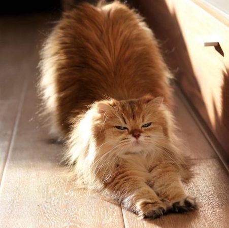 фото смешных котиков