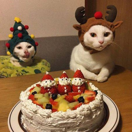 Коты в праздничных шапочках