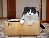 кот по почте