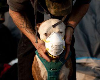 Пожар в Калифорнии 2018 — как спасали животных