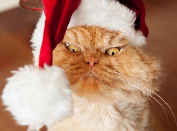 Кот в шапке Деда Мороза