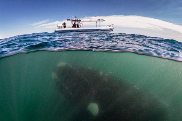 что скрывается под водой