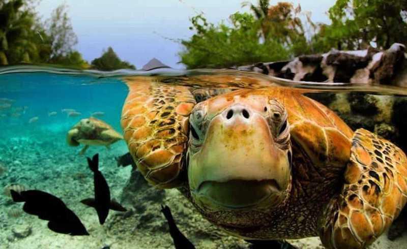 Что скрывается под водой — фото