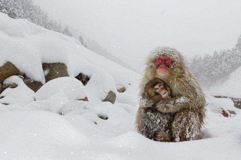 Лучшие фотографии года по версии World Press Photo