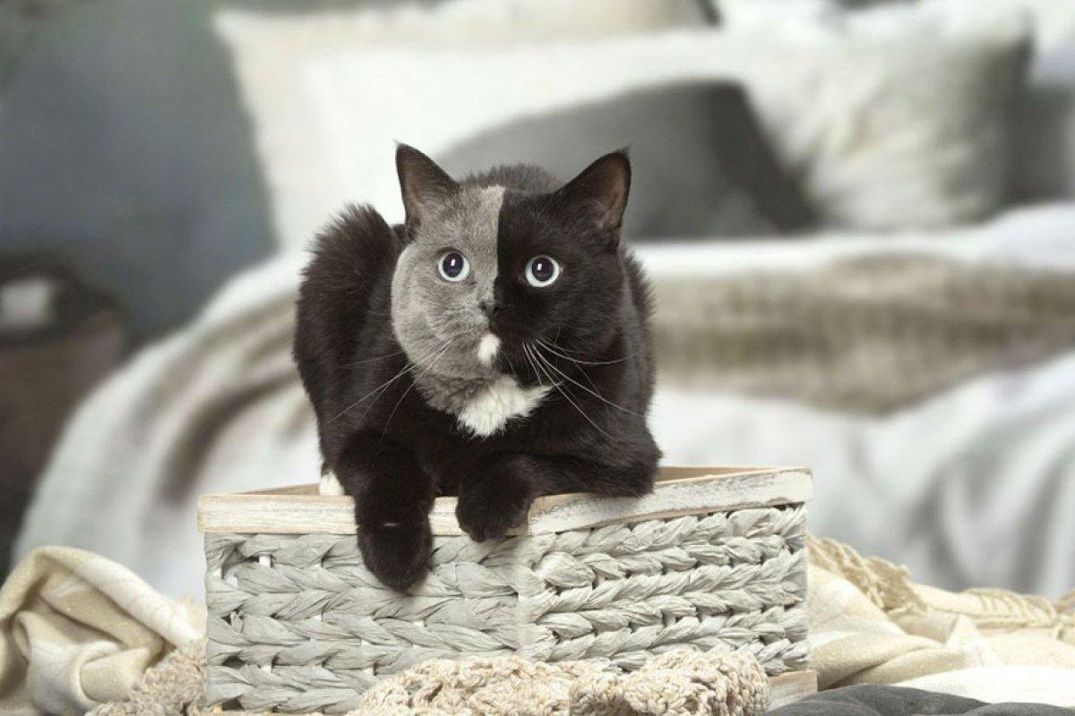 Фото микай кошки