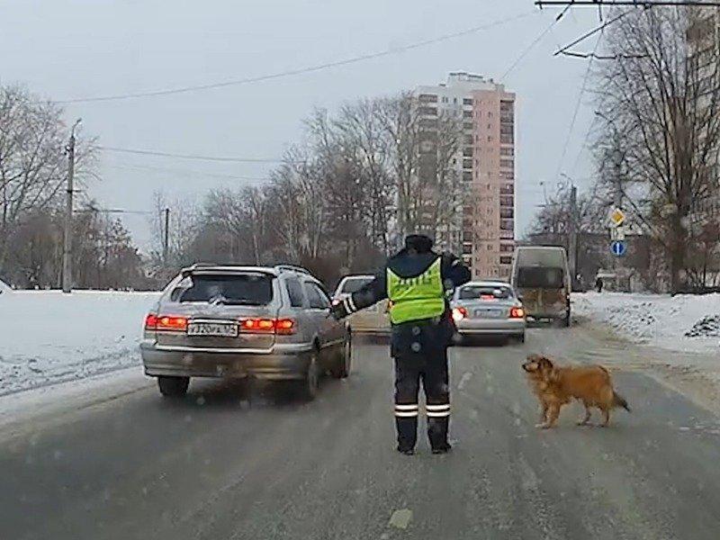 Российский гаишник перекрыл движение ради хромого пса