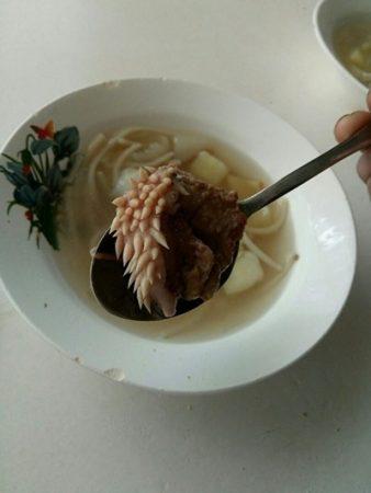 щупальце в супе ученика