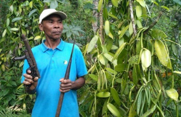 Фермер на ванильной плантации