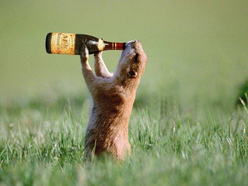 Грызун пьёт из бутылки