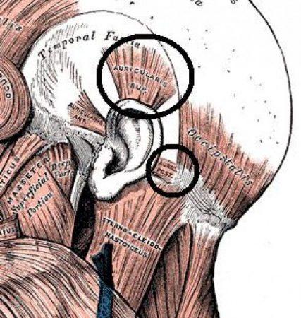 Мышечный корсет головы