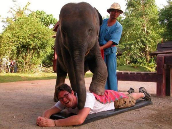 Слон-массажист