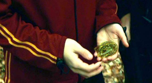 Жаборосли в руках Гарри