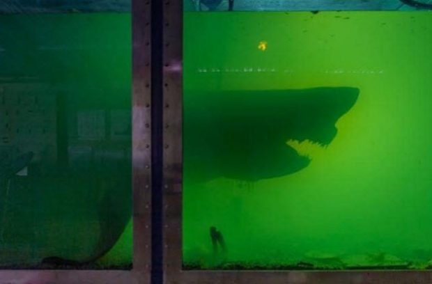 Тень акулы