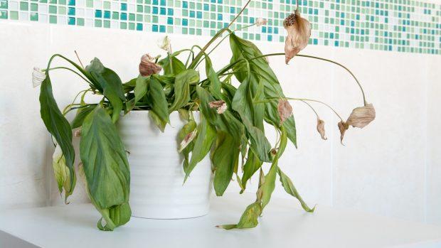 вялые растения