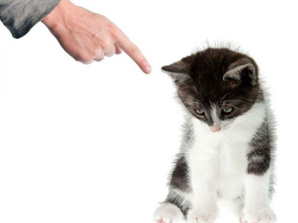 Наказывание котёнка за плохое поведение