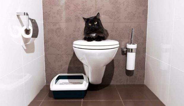 Кошка на подвесном унитазе