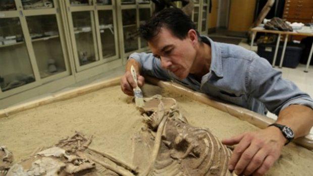 Археолог изучает скелет