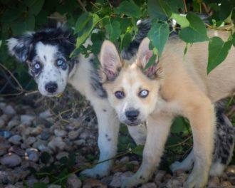 Топ 10 самых редких пород собак в мире
