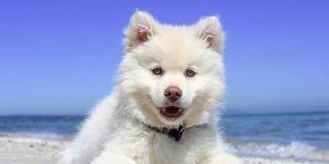 10 самых красивых пород собак: не влюбиться невозможно